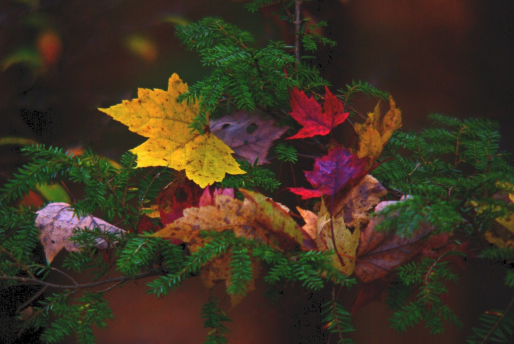 Photo is of leaves in different colors.