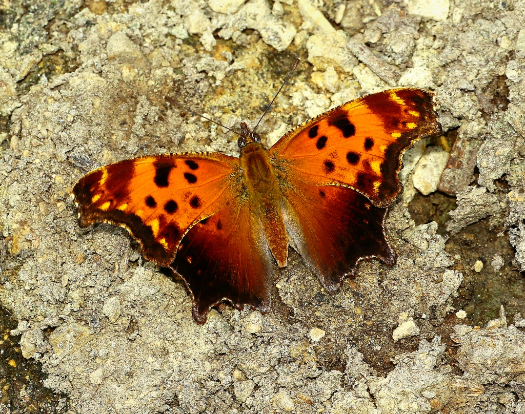 Photo is of an orange butterly.